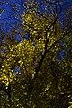 پاییزدر ایران-قاهان قم-Autumn in iran-qom 28.jpg