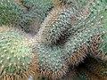 گلخانه کاکتوس دنیای خار در قم. کلکسیون انواع کاکتوس 01.jpg