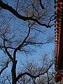 北池子大街2 - panoramio.jpg