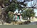 千年古槐 - panoramio (1).jpg