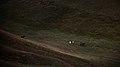 塔克拉克牧场 - panoramio (6).jpg