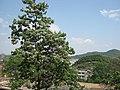 平山 - panoramio.jpg