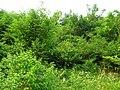 昭关镇乌龟山的树林 - panoramio.jpg