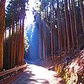 林道小菅線-01 - panoramio.jpg