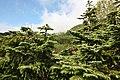 栂池自然園 - panoramio - くろふね (23).jpg