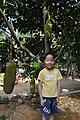 菠萝蜜 - panoramio (1).jpg