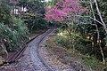 阿里山森林鐵路 Alishan Forest Railway - panoramio.jpg