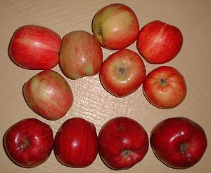 Gravenstein apple, 2 unique red strains Britis...