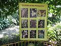 05704jfMidyear Orchid Plants Shows Quezon Cityfvf 36.JPG