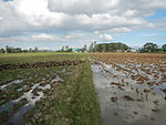 09426jfRoads fields Domesticated ducks Bahay Pare Candaba Pampangafvf 15.JPG