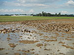 09461jfRoads Paddy fields Domesticated ducks Paligui Candaba Pampangafvf 24.JPG