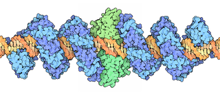 Transcription activator-like effector nuclease