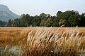1 Bandhavgarh National Park Madhya Pradesh India.jpg