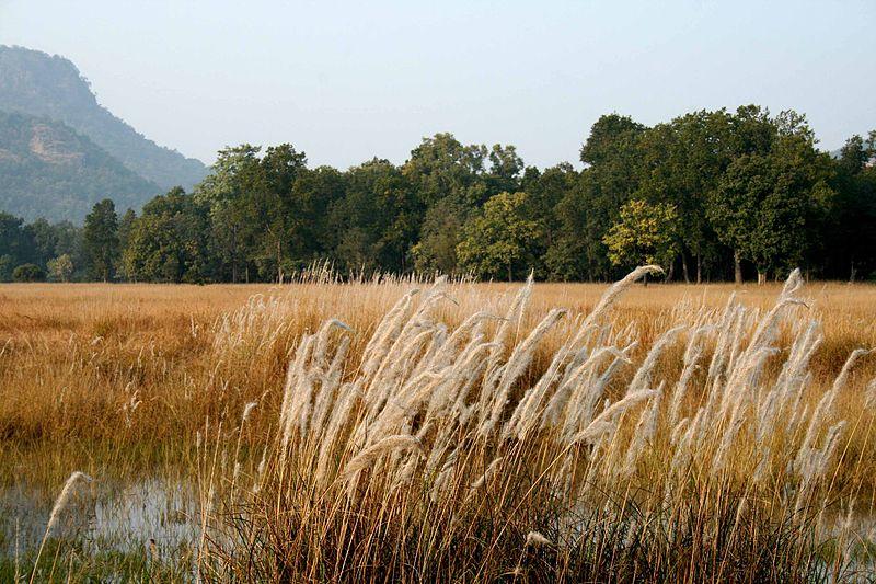Fichier:1 Bandhavgarh National Park Madhya Pradesh India.jpg