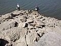 2011年8月14日阿苇滩水库白石头24小时都有人钓鱼的黄金位置也不好钓了 余华峰 - panoramio.jpg