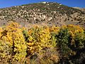 2013-10-06 15 52 02 Cottonwoods along Lamoille Creek at the entrance of Lamoille Canyon.JPG