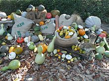 a variety of fruits displayed in a garden, some in a sack, some in a basket