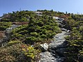 2017-09-11 12 03 00 View east along the Maple Ridge Trail at about 3,790 feet above sea level on the western slopes of Mount Mansfield within Mount Mansfield State Forest in Stowe, Lamoille County, Vermont.jpg