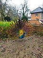 2020-12-12-Hike-to-Rheydt-Palace-and-its-surroundings.-Foto-13.jpg