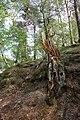 20210518. Sächsische Schweiz.Rauenstein.-053.jpg