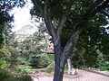 20Bosque de la República Monumento Nacional Abandonado Tunja.Centro histórico 2011.jpg