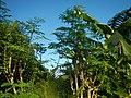 2191Grasslands, trees, paddy vegetable fields 48.jpg