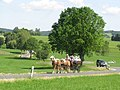 21te Rammenauer Schlossrundfahrt der Pferdegespanne (140).jpg