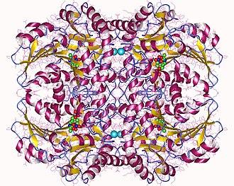 Cystathionine beta-lyase - Cystathionine beta-lyase tetramer, E.Coli