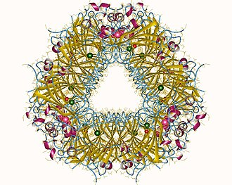 Oxalate decarboxylase - Oxalate decarboxylase hexamer, Bacillus subtilis