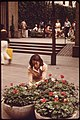 A CBS SECRETARY USES HER LUNCHBREAK TO HELP PLANT FLOWERS AT ENTRANCE TO PALEY PARK, A GIFT TO THE CITY FROM CBS... - NARA - 551705.jpg