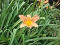 A Flower in Nanda Devi National Park.jpg