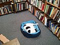 A Second Cat Snoozes.jpg