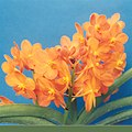 A and B Larsen orchids - Ascocenda Su-Fun Beauty 291-4x.jpg