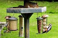 A busy birdfeeder (7355182424).jpg