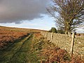 A grass track and drystone wall - geograph.org.uk - 640885.jpg