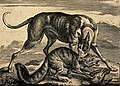 A hunting dog is biting a fox which in turn is killing a bird Wellcome V0020448.jpg