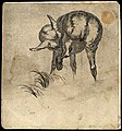 A lamb rubbing its nose with its rear leg. Etching. Wellcome V0021695.jpg
