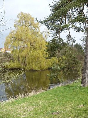 English: A willow tree by the water next to Th...