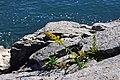 Acadia 2012 08 22 0386 (7958506118).jpg