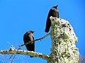 Acadia National Park (8111127354).jpg