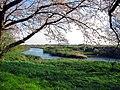 Ageo Ara River 1.JPG