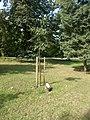 Ajándékfák parkja, Koppány fa, 2017 Sóstógyógyfürdő.jpg