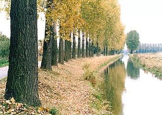Aller (Germany) - The canalised and poplar-lined Aller in the Drömling near Wolfsburg-Vorsfelde