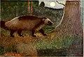American animal life (1916) (14576929990).jpg