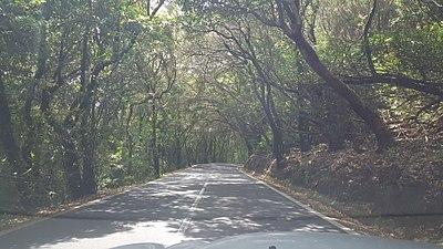 Anaga forest.jpg