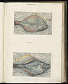 Animal drawings collected by Felix Platter, p1 - (123).jpg