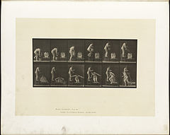Animal locomotion. Plate 406 (Boston Public Library).jpg