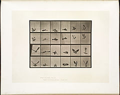 Animal locomotion. Plate 757 (Boston Public Library).jpg