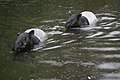 Antwerp zoo, Belgium (1400238642).jpg
