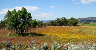 Anza, California - Spring blooms, Anza, California